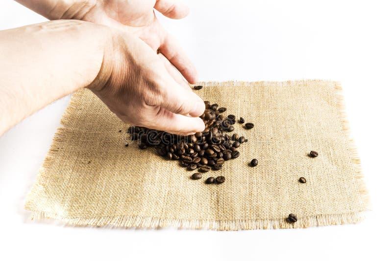 Mani dell'uomo che liberano un mucchio dei chicchi di caffè su una tovaglia del panno della rafia su un fondo bianco immagine stock