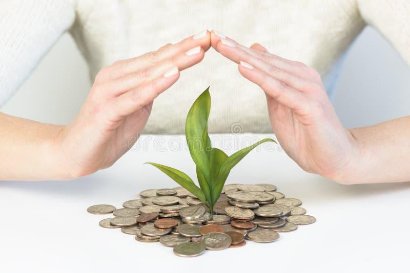 Mani della donna che proteggono concetto della pianta di soldi che cresce dai soldi fotografie stock