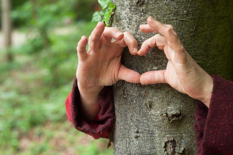 mani della donna nel cuore a forma di sul tronco di albero nella foresta fotografia stock libera da diritti