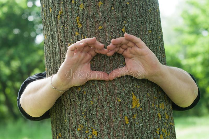 mani della donna nel cuore a forma di sul tronco di albero nella foresta fotografia stock