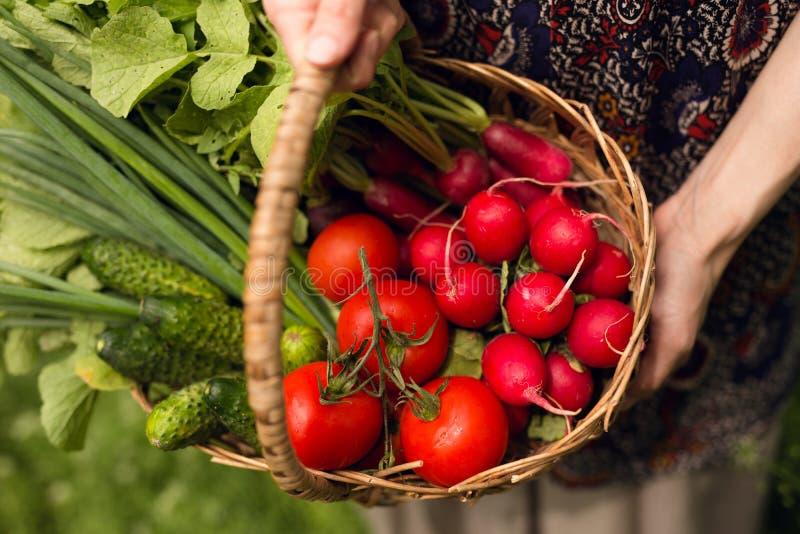 Mani di una lavoratrice agricola Un agricoltore tiene un canestro con le verdure sulle sue mani tese immagine stock