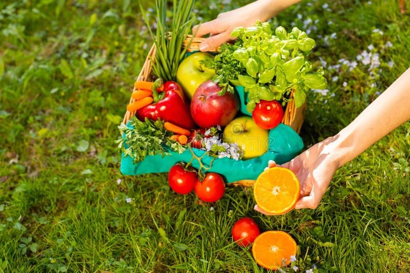 Mani femminili che tengono canestro di vimini con le verdure e la frutta, fine su fotografie stock