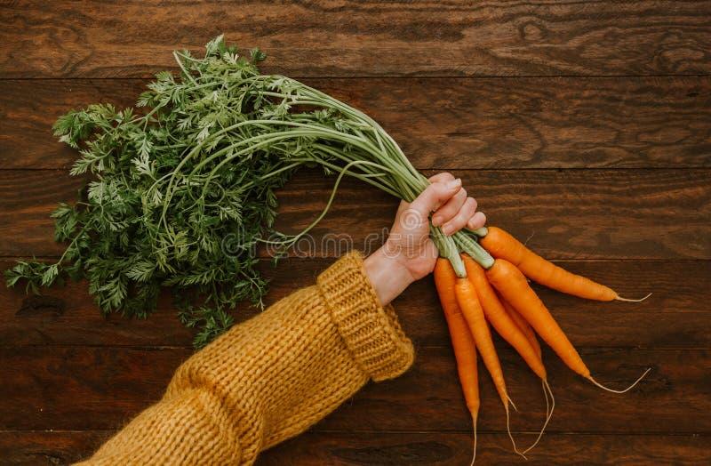 Mani femminili che tengono i mazzi di carote crude immagini stock