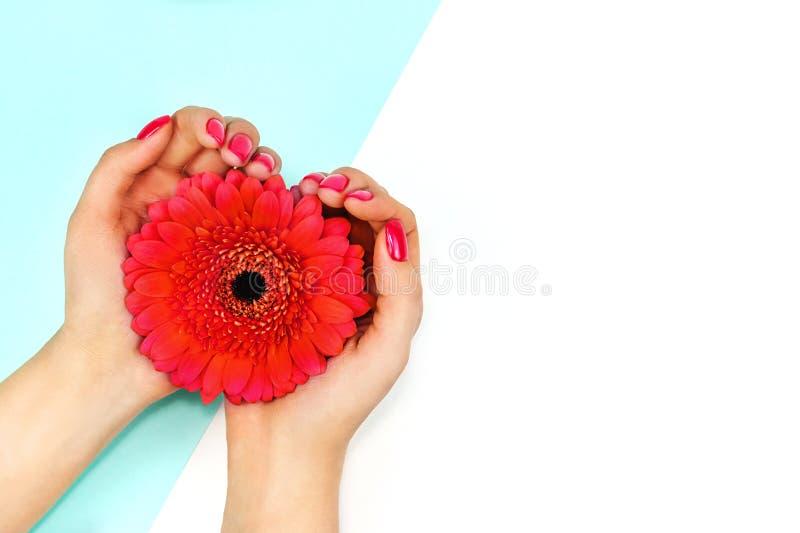 Mani femminili con la gerbera di corallo d'avanguardia della tenuta di progettazione del chiodo su fondo blu e bianco Copi lo spa immagini stock