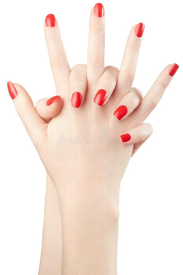 Mani femminili con smalto rosso su bianco immagine stock
