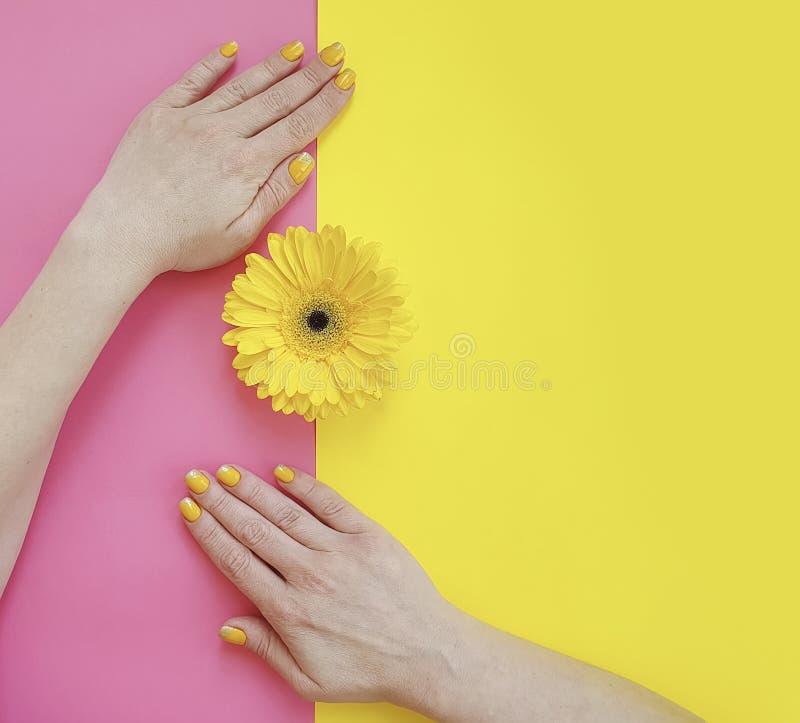 Mani femminili manicure, fiore elegante di bellezza della gerbera di stile di vita alla moda di tendenza su un fondo colorato immagini stock libere da diritti