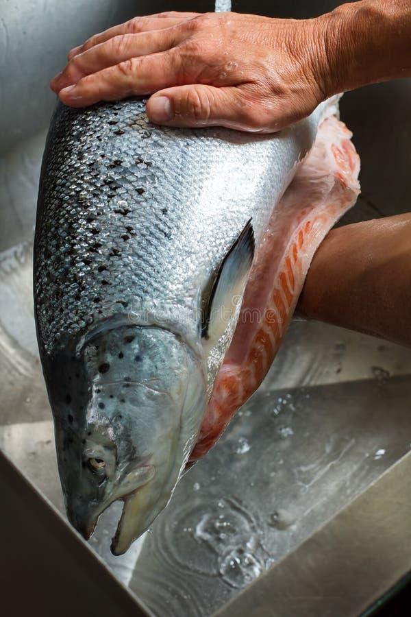 Mani maschii che tengono un pesce immagini stock libere da diritti