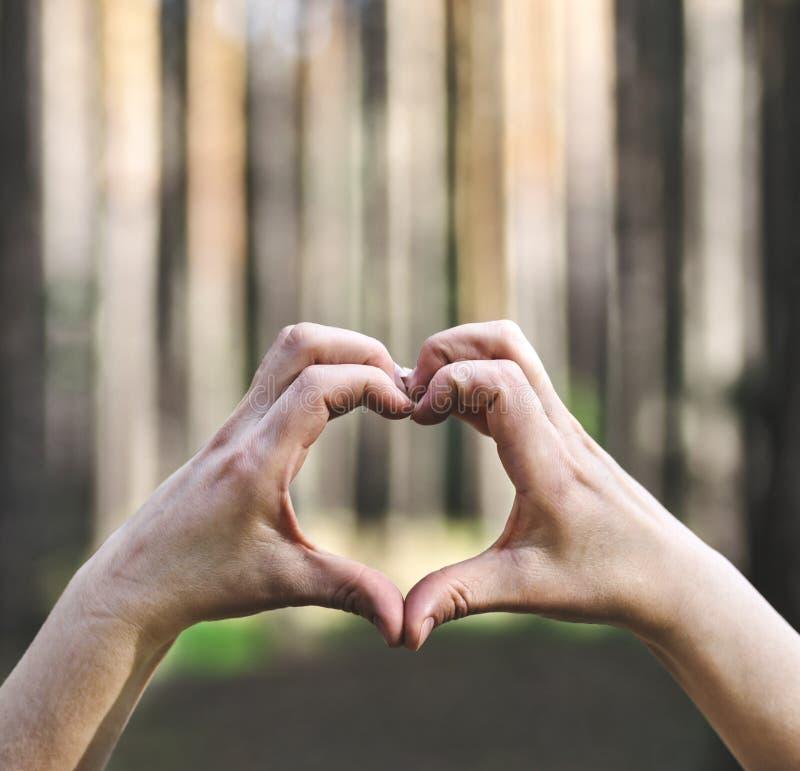 Mani nella forma del cuore di amore sulla natura immagini stock libere da diritti