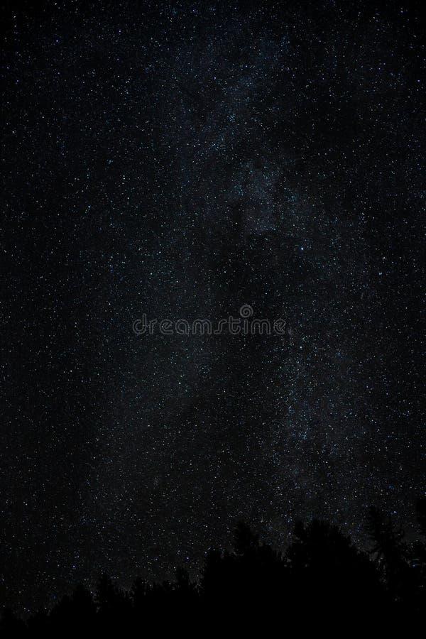 Mani?re laiteuse de ciel nocturne avec milliard d'?toiles et de silhouette d'arbre photos stock