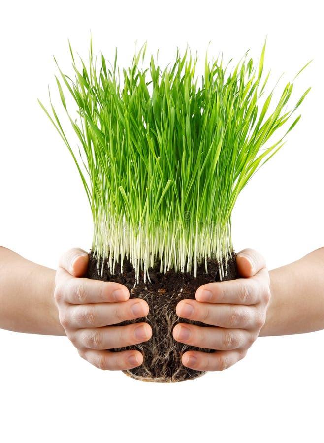 Mani umane che tengono erba verde con terra fotografia stock libera da diritti