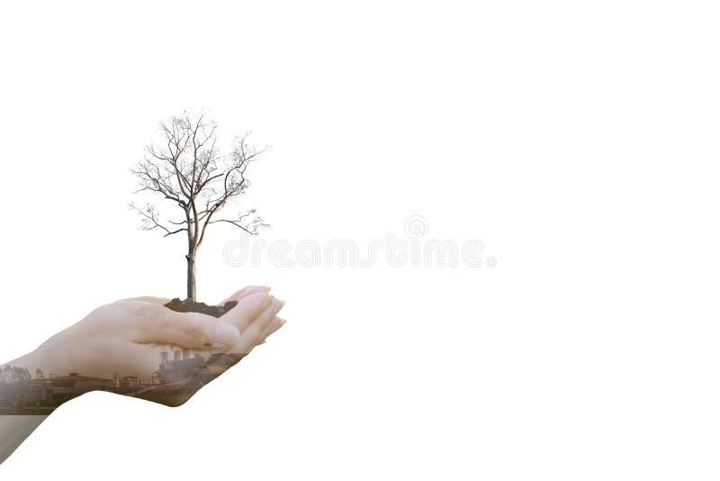 Mani umane di concetto di ecologia di doppia esposizione che tengono il grande albero della pianta immagine stock libera da diritti