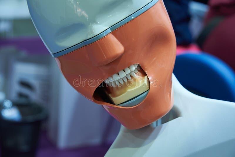 Manichino per gli studenti d'istruzione procedure terapeutiche dentarie fotografia stock libera da diritti