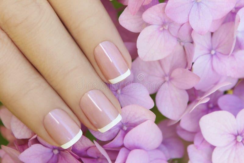 Manicura francesa de la lila rosada corta imagen de archivo libre de regalías