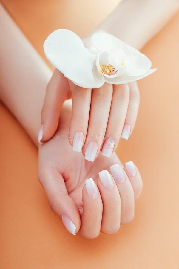 Manicura francesa de Ombre con la orquídea en fondo anaranjado La mujer con la manicura francesa del ombre blanco sostiene la flo imagen de archivo libre de regalías