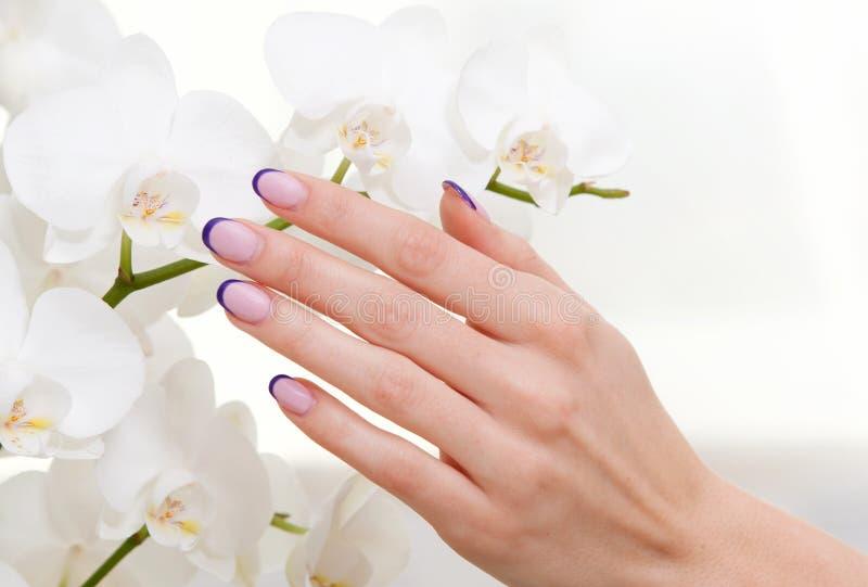 Manicure и орхидея стоковая фотография rf