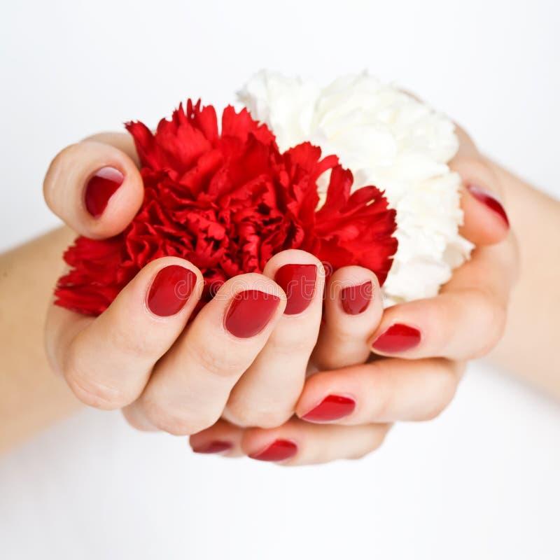 Manicure com os cravos vermelhos e brancos imagem de stock royalty free