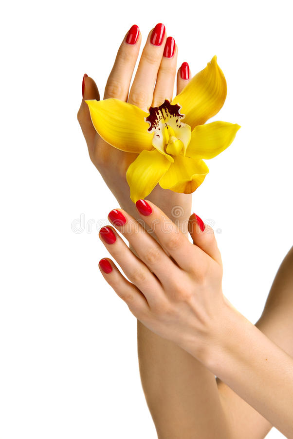 Manicure e orquídea imagens de stock