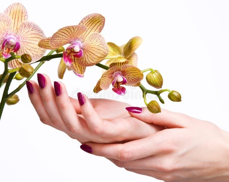 Manicure e orquídea cor-de-rosa foto de stock