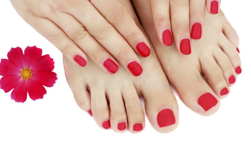 Manicure e pedicure rossi con il primo piano del fiore, isolato su fondo bianco fotografia stock libera da diritti