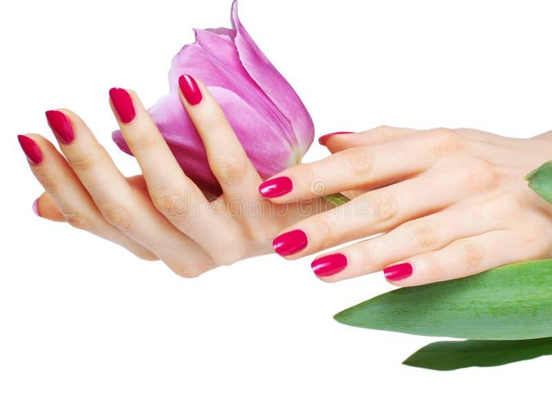 Manicure e tulip cor-de-rosa imagens de stock