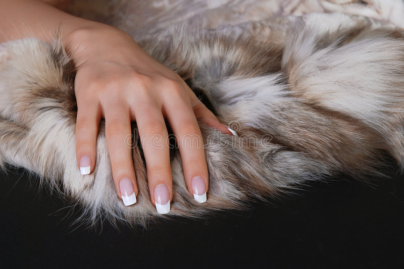 Manicure and furs stock image