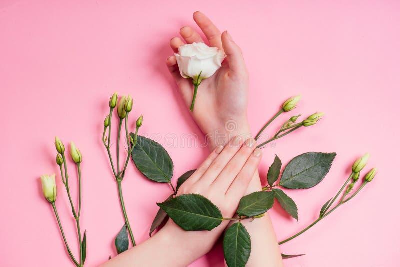 Manicure Naturalna świeżość i młodzieńcze dłonie, kosmetyki ręczne z ekstraktem z białego róży, produkt Moda zdjęcie stock