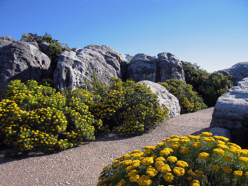 Download Manicured garden stock image. Image of shrub, boulder, yellow - 398965