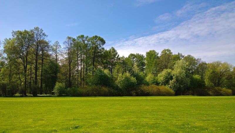 Manicured gräsmatta i ett propert parkerar med träd i bakgrunden royaltyfri fotografi