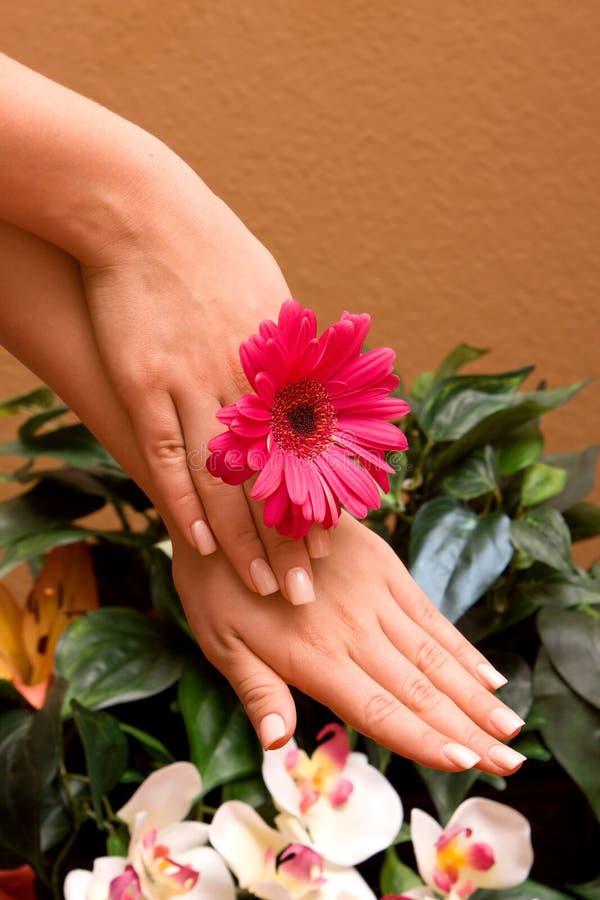 Manicured Hände der Frau stockbild