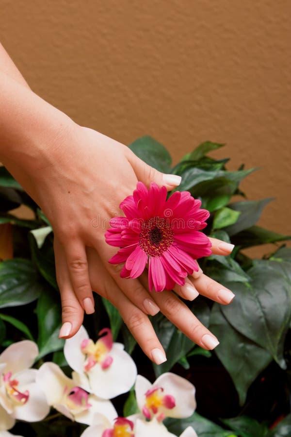 Manicured Hände der Frau stockbilder