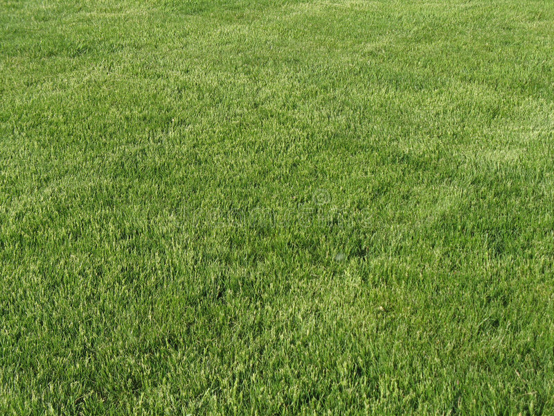 Manicured lawn royalty free stock images