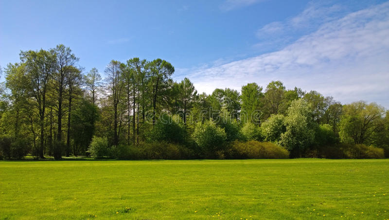 Manicured lawn in a neat Park with trees in the background royalty free stock photography