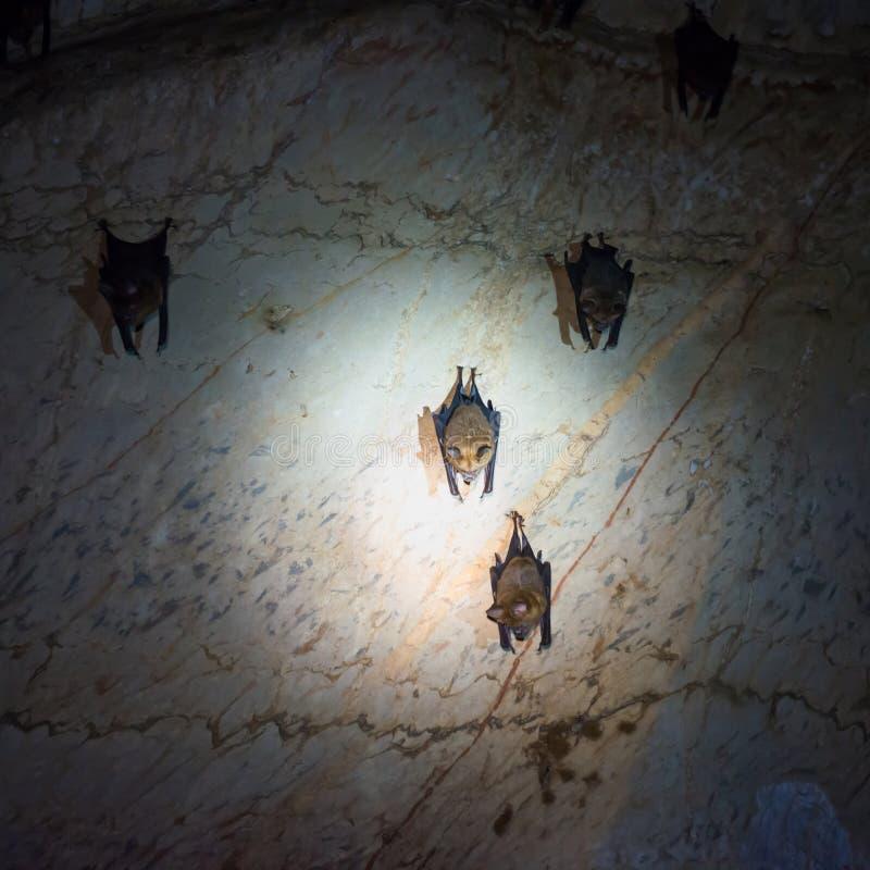 Manie la batte la colonie en caverne naturelle photo stock