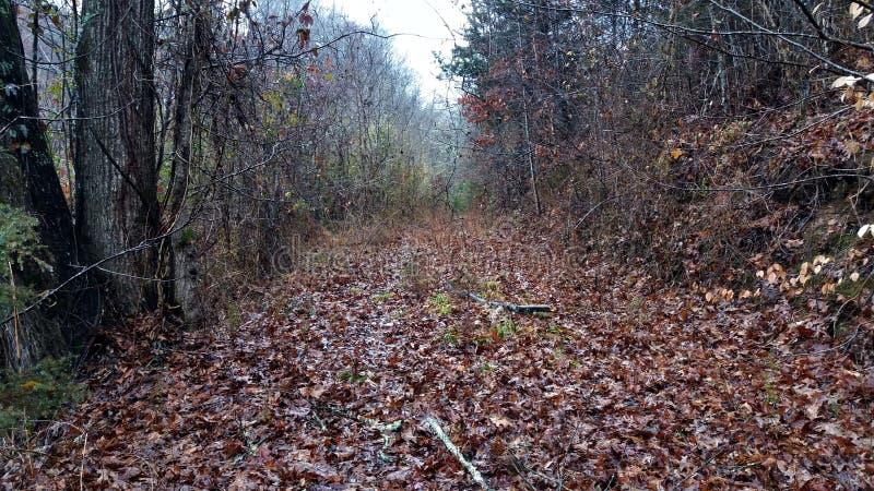 Manier door het boshoogtepunt van bladeren stock fotografie