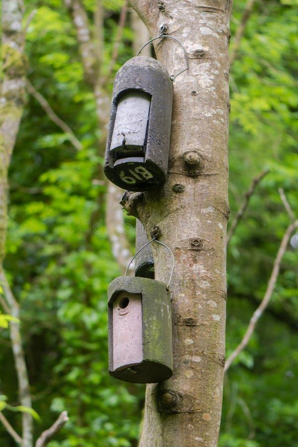 Maniez la batte la boîte et la boîte d'oiseau attachées à l'arbre photographie stock libre de droits