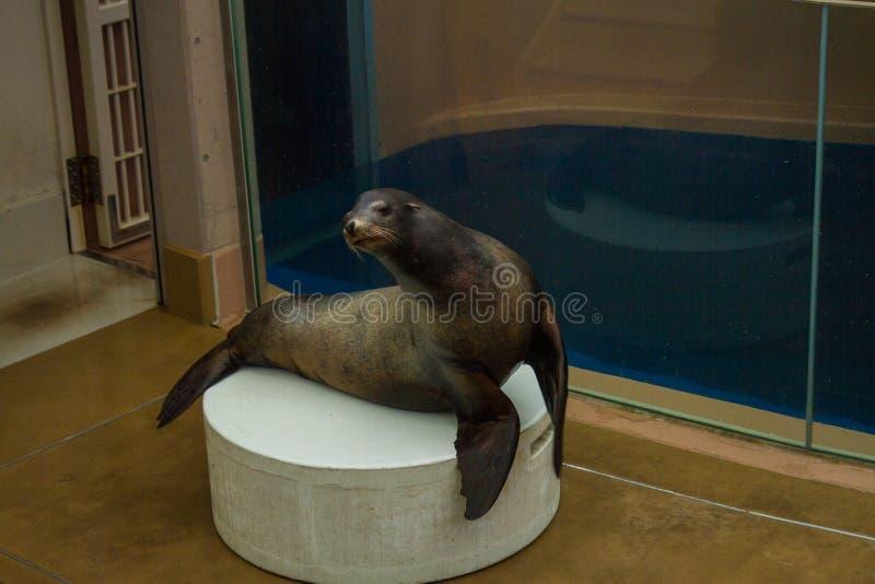 Manifestazione akita dell'acquario del Giappone immagini stock
