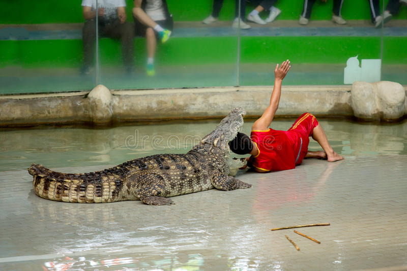 Manifestazione del coccodrillo ed eccitare ed il pericolo dell'uomo allo zoo del coccodrillo immagine stock