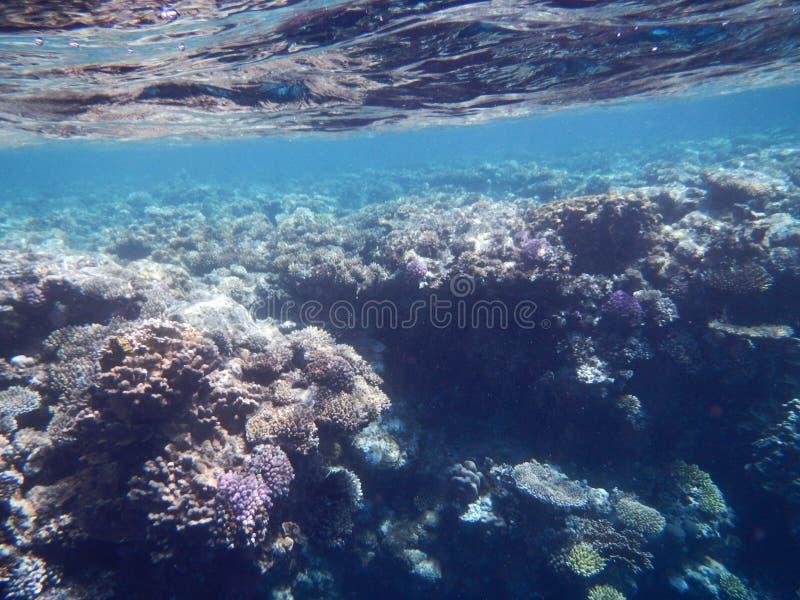 Manifestazioni del Mar Rosso fotografia stock