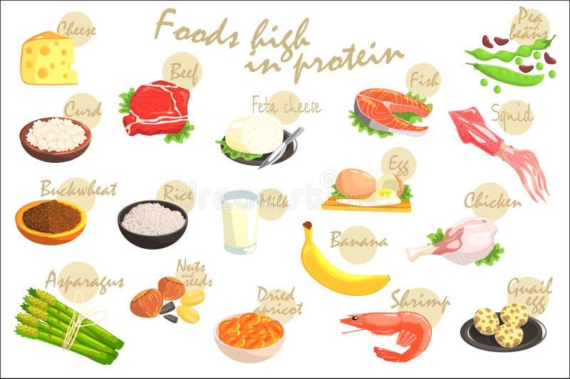 Manifesto di Rich In Proteins Hand-Drawn Realistic dell'alimento con informazioni del testo nella progettazione di vettore illustrazione vettoriale