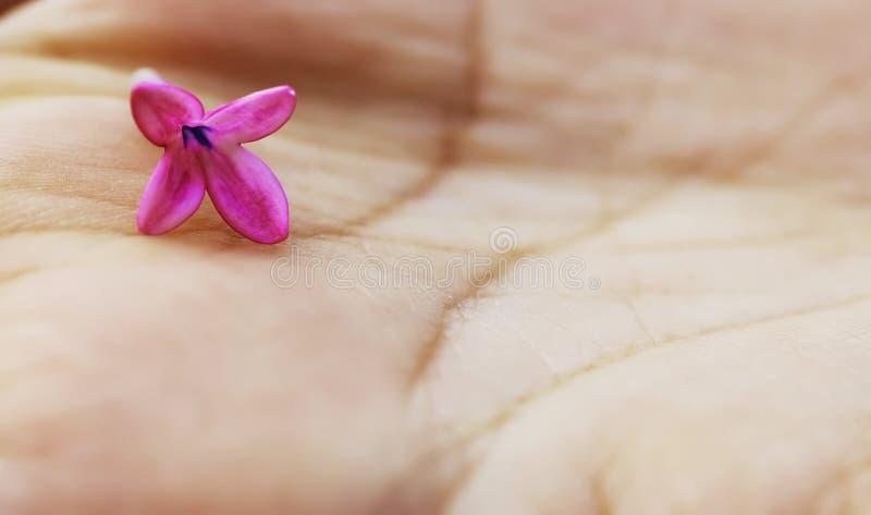 Download Maniglia con attenzione immagine stock. Immagine di serene - 213799