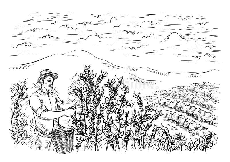 Manihopsamlaren skördar kaffe på landskapet för kaffekolonin i grafisk stil hand-dragen vektor stock illustrationer