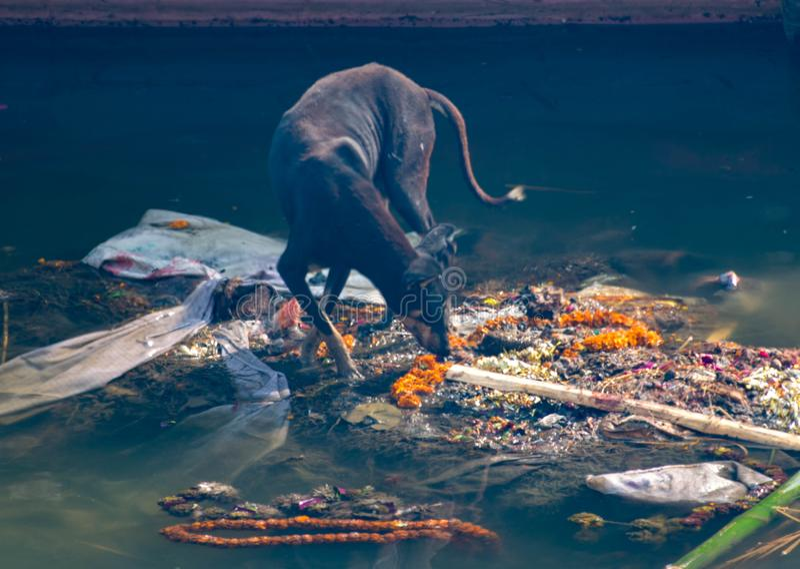 Manikarnika ghaat i Varanasi Holly Ganga ghaat royaltyfri foto