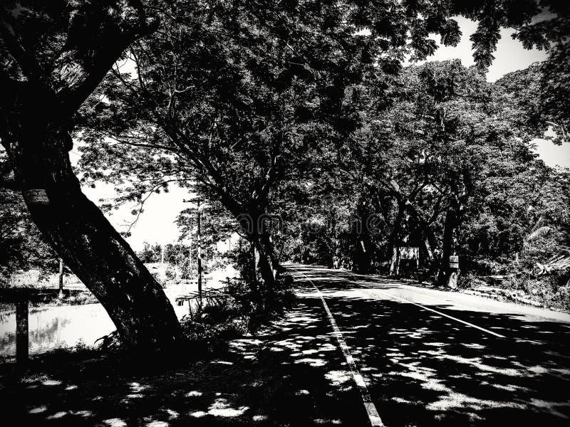 Manikganj, Bangladesz: Światło & cień zdjęcia royalty free