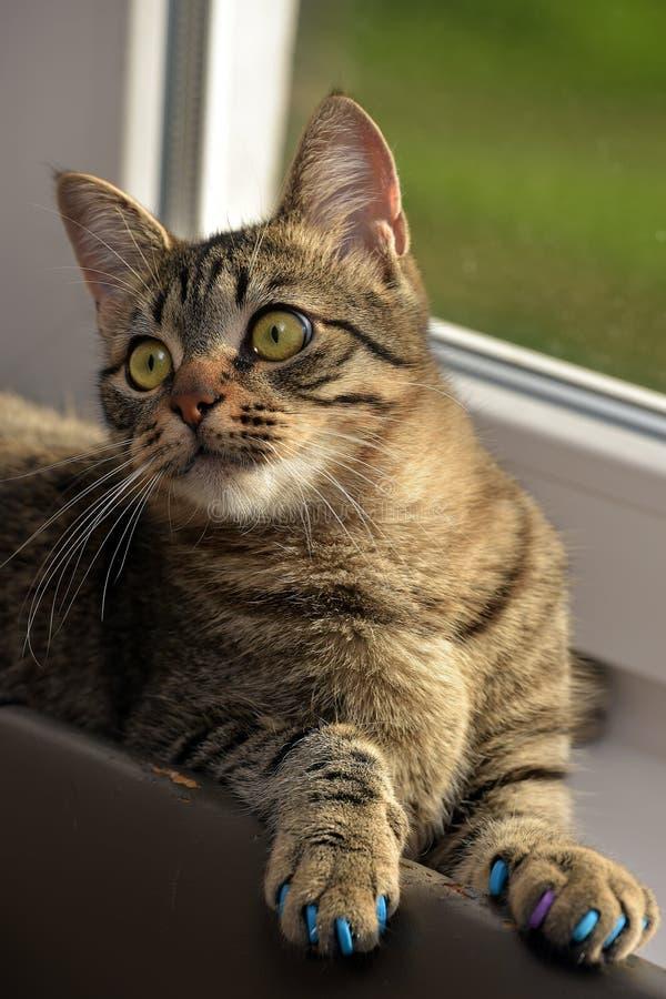 Download Manikyr för katter fotografering för bildbyråer. Bild av barnomsorg - 76703407