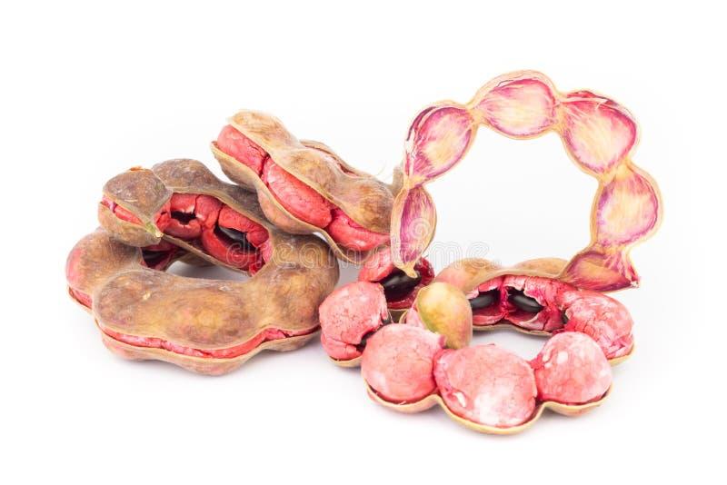 Manila tamarind fruit isolated on white background. Manila tamarind fruit on white background royalty free stock photos