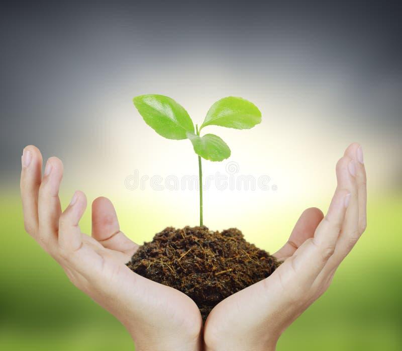 Maninnehavväxt i hand stock illustrationer