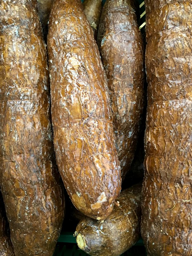 Manioc, Yuca de Costa Rica photo stock
