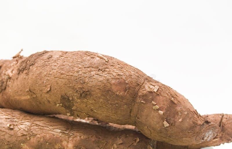 manioca fotografie stock libere da diritti