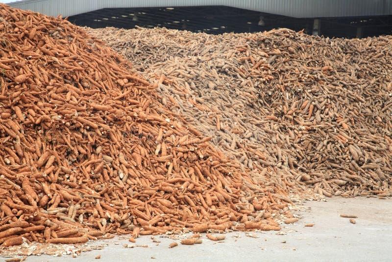 Manioka zugebereitet an der Tapiokamehlfabrik stockbilder