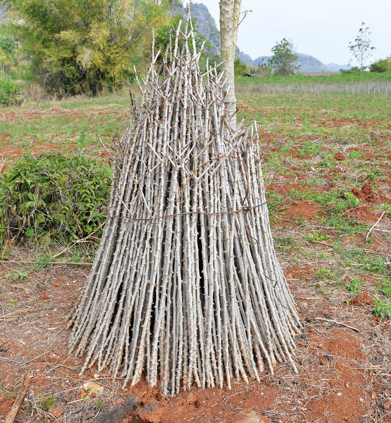 Manioktak stock afbeelding